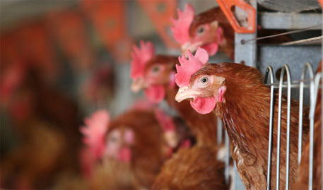 US wins poultry case against India at WTO