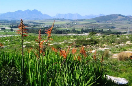 South Africa's Cape Town restores landfill as natural reserve