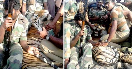 'Man-eater' tiger shot dead near Mudumalai reserve