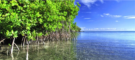 Destruction of mangroves causes damages of up to $42 billion each year