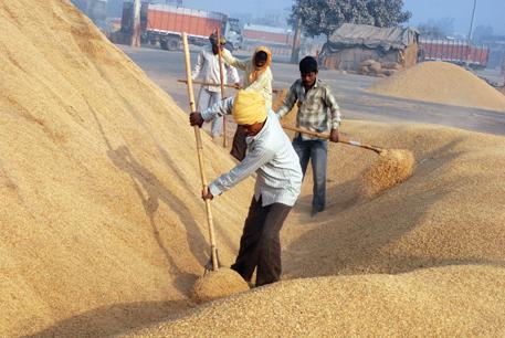 Grain glut