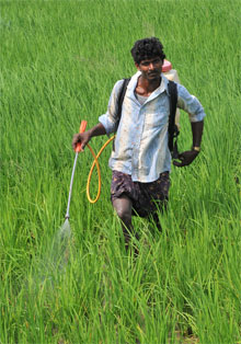 Introduction of 'data exclusivity' in pesticides Bill will affect farmers
