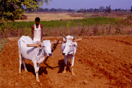 Consultation on African Soil Partnership focuses on sustainable soil management