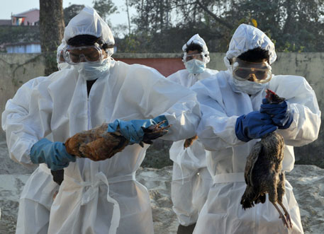 2,500 birds culled to stop bird flu spread in Bihar