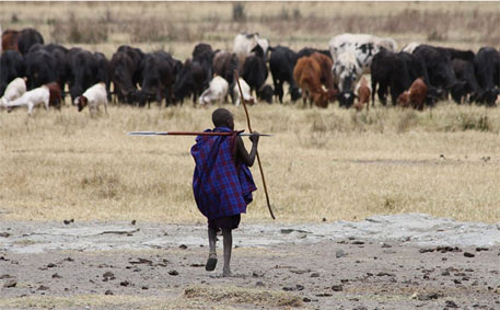 Africa's Masai tribals turn slaughterhouse waste to biogas