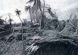 Dwindling tree cover dilates storm havoc