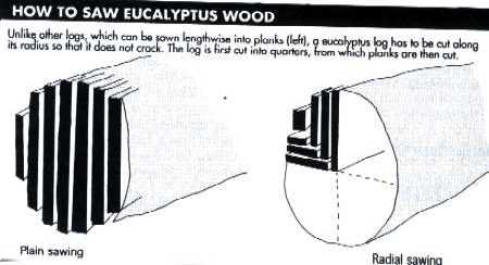 Making furniture from eucalyptus wood