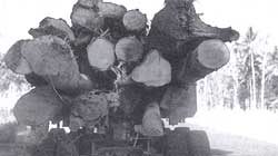 Timber trouble