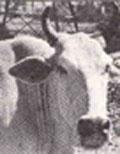 Livestock largesse