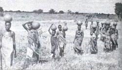 Thirst trudge: Kenyan women in