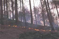 Flames lick their way towards< (Credit: Photographs: Arvind Yadav /CSE)
