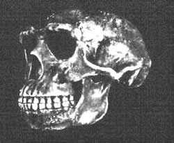 Last remains: a Neanderthal sk