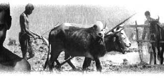 Bill Or Bull?