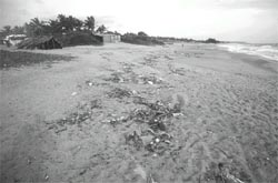Goa bans plastic bags