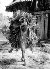 Nepal's poor carry it off