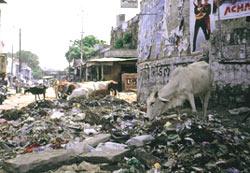 Trash tax