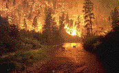 Forest afire in Colorado