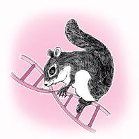 Altering genes - Squirrels respond to global warming