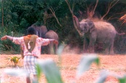 Battle zone: Humans vs elephants