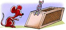 Virus trap
