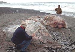 Leviathan mystery