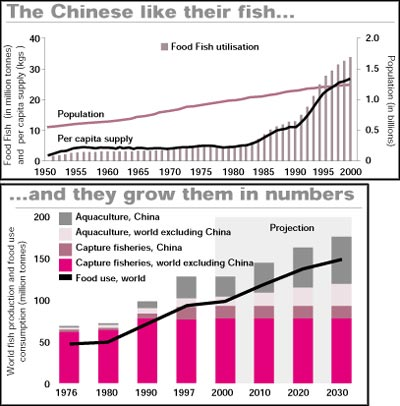 Will China challenge world fish stocks?