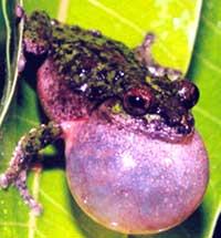 Raining frogs