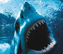 Shark record