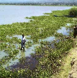 Pollutants flood Lake Victoria