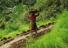 Organic drive in Uttaranchal ignores farmers' concerns