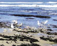 More oceanic dead zones