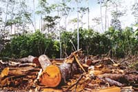 Biofuel project in Indonesia faces flak