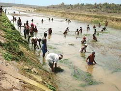 Bureaucracy restricts potential of Orissa's pani panchayats