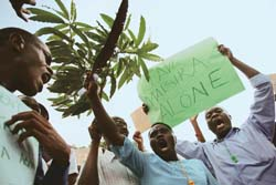 Uganda protests over sugar plantation on forestland