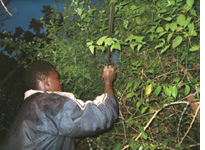 Swaziland to fight invasive species