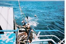 World's first sustainable tuna fishery