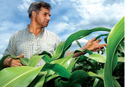 Call for moratorium on biofuel