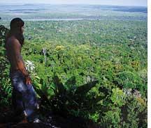 371,000-ha rainforest sold in Guyana