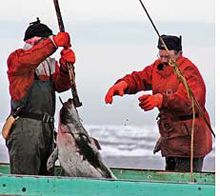 Seal hunt kicks off amid protests