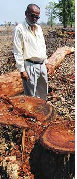 Cannot cut trees on one's own land