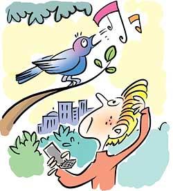 Avian call