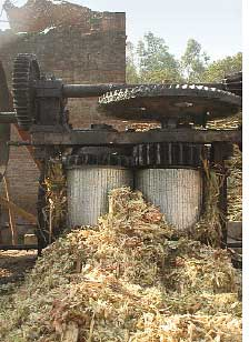 Sugar mills turn U