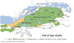 Kaziranga loses 10 tigers