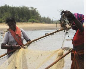 Spam in fishing net