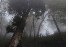 Smoking trees