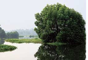 644 ha mangrove will be history