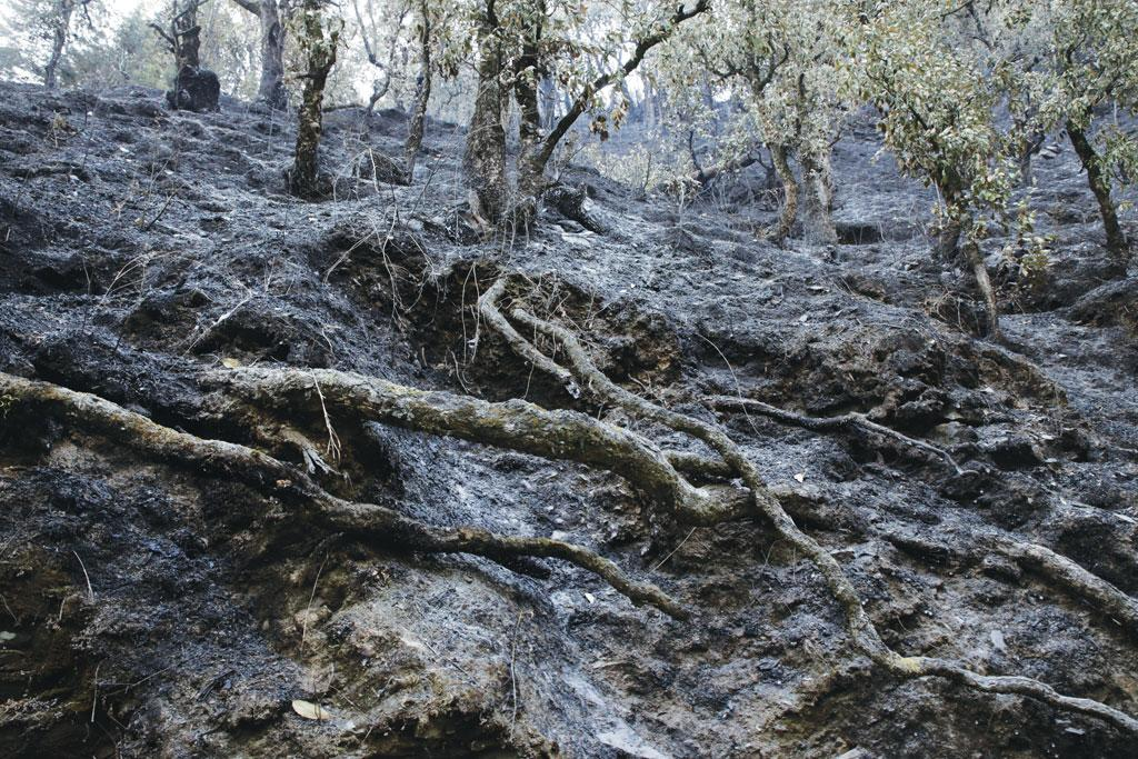 Burnt forest near