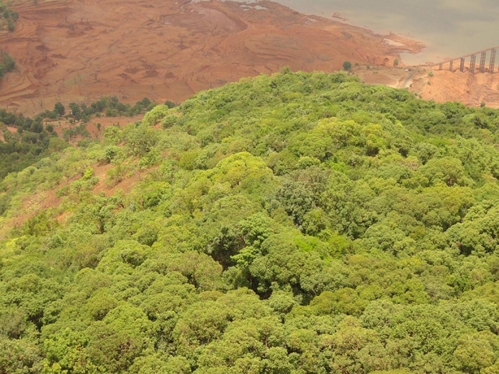 According to the India State of Forest Report (ISFR) 2015, the total carbon stock in the country's forests is estimated to be 7,044 million tonnes (Balaji Photography/Flickr)