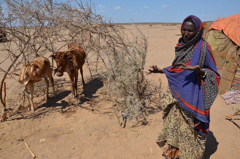 Apart from agriculture, many Ethiopian households depend on their livestock for food and income (Photo: WFP/Melese Awoke, via Flickr, CC BY-SA 2.0)