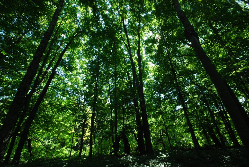 Are forests just an asset? (via Creative Commons)
